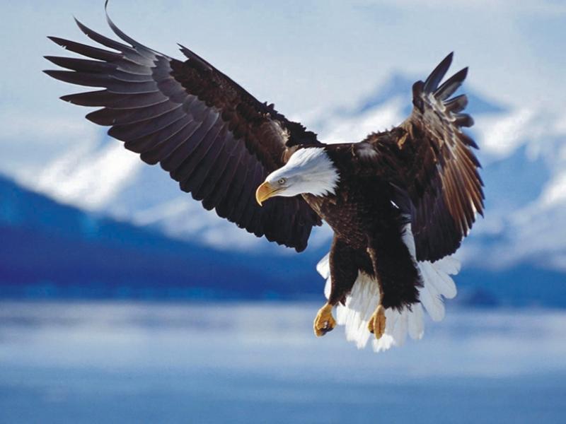 Poučna priča o orlu…